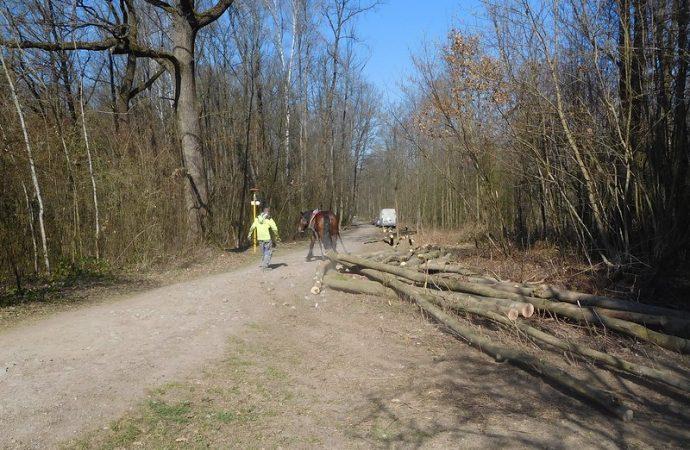 Škodcami napadnutý Lesopark Chrasť potrebuje pomoc, mesto začalo asanovať choré stromy