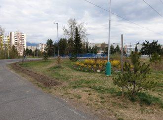 Nové kríky majú zabrániť ničeniu ostatnej zelene na jednej z ulíc Liptovského Mikuláša