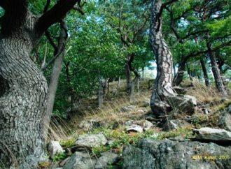 Manželia si kúpili les, chcú ho zachrániť