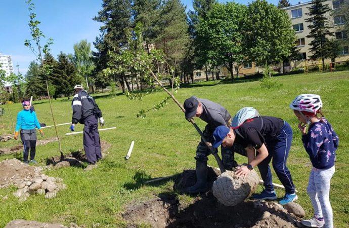 Nábrežie v Liptovskom Mikuláši skrášlia nové stromy a kríky