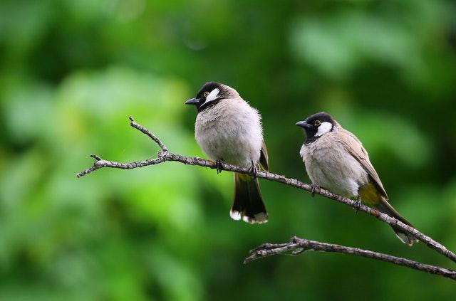 Ničenie vtáčích hniezd nie je riešením. Ako v meste chrániť lastovičky a belorítky?