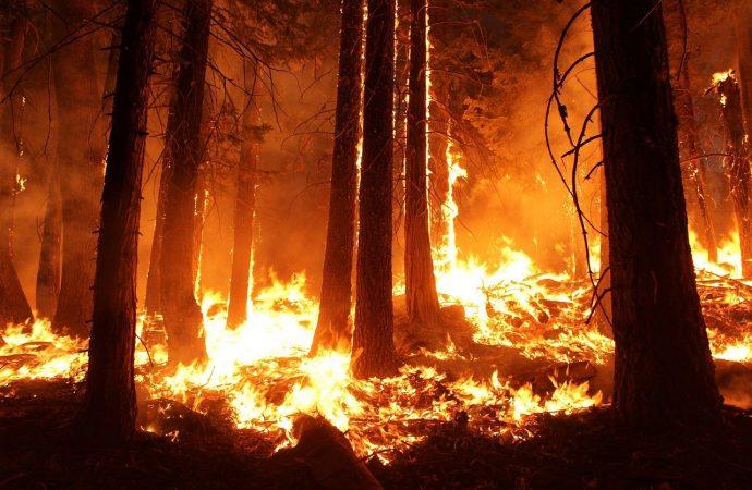 Zvýšme pozornosť počas leta a chráňme sa pred požiarmi