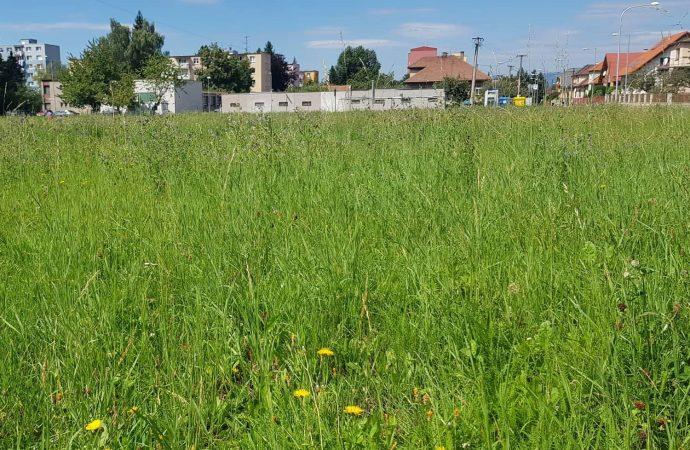 Za nepokosené pozemky hrozí pokuta, upozorňuje mesto Liptovský Mikuláš