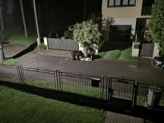 Medveď v Liptovskom Hrádku opäť prevracal nádoby na odpad
