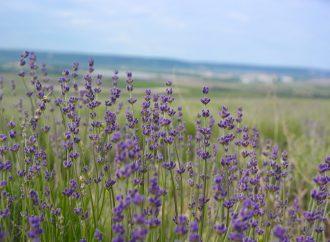 Oravské kultúrne stredisko pokračuje v rozprávaní o sile prírody a bylín