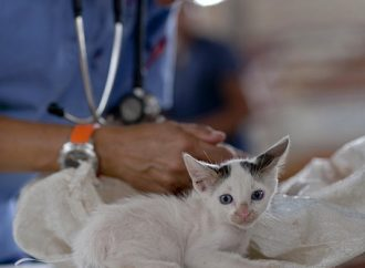V utorok sa v Rajeckých Tepliciach vykoná povinná vakcinácia psov a mačiek