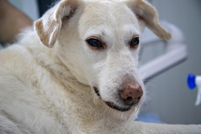 V Turzovke sa bude vykonávať hromadné očkovanie psov