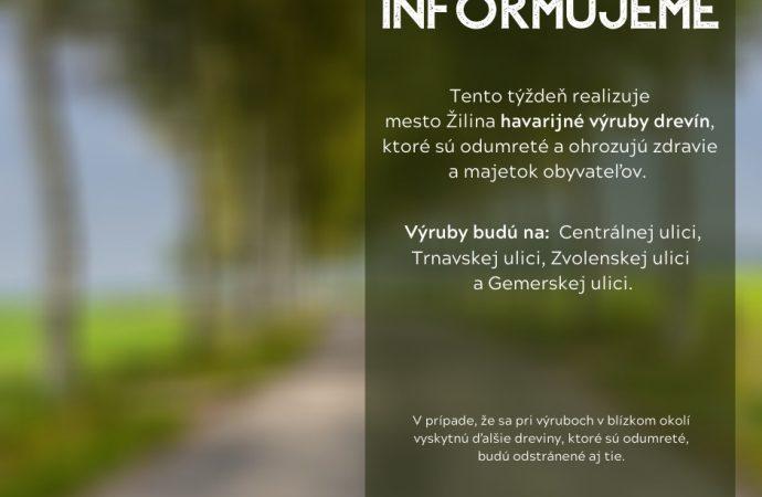 Mesto Žilina pokračuje v havarijnom výrube drevín