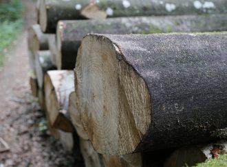 V Žiline prebieha výrub odumretých stromov