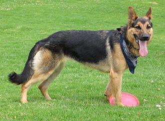 Užitočné informácie pre majiteľov psov