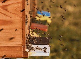 V Múzeu kysuckej dediny bude rozvoniavať med. Zaručí to podujatie Včelárska a sladká nedeľa