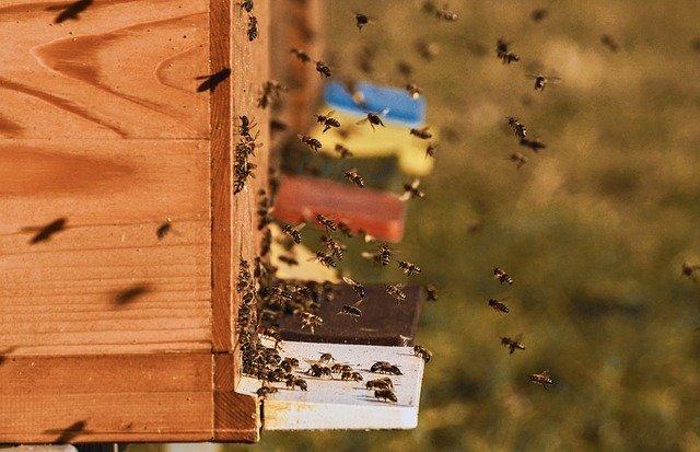 Veterinárna správa zistila výskyt moru včelieho plodu, vyhlásila ochranné pásma