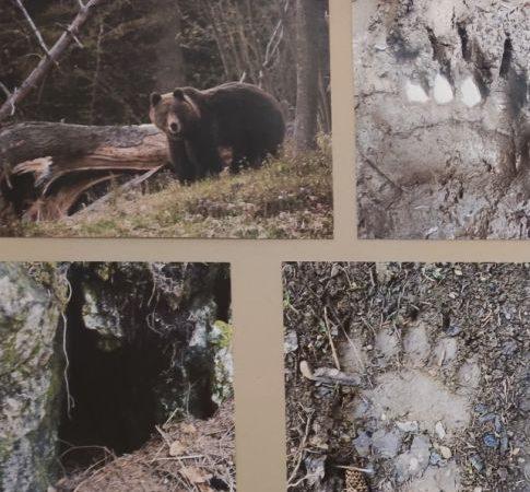 """V Dome UNESCO Vlkolínec nájdete výstavu """"Po medvedích stopách"""""""