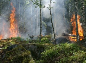 Zabezpečenie ochrany lesov a lesných porastov pred požiarmi