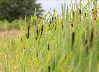 Mesto Trstená vyzýva obyvateľov na starostlivosť o svoje nehnuteľnosti a vykosenie zaburinených pozemkov