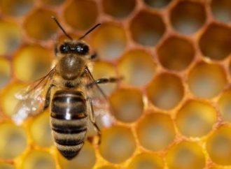 Mesto Turany informuje o likvidácii pozitívnych včelstiev