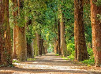 Mesto Žilina plánuje výsadbu nových stromov, dreviny vzlom zdravotnom stave odstráni