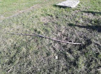 Neznámy páchateľ v Liptovskom Mikuláši opäť vypílil vysadené stromčeky na Nábreží