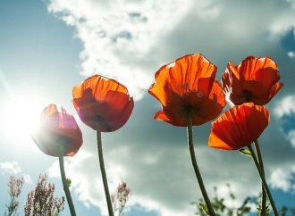 11. novembra sa rozozvučia zvony pripomínajúce hodnoty mieru