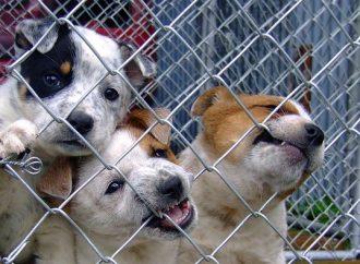 Miesto ohňostroja mesto Liptovský Mikuláš poskytne pomoc zvieratkám v útulku