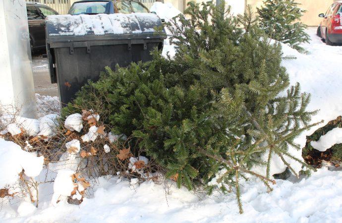 Mesto Rajec zabezpečí odvoz použitých vianočných stromčekov