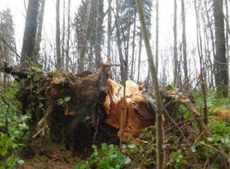 Mesto Žilina odstraňuje kalamitu v Lesoparku Chrasť