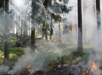 Opatrenia a základné požiadavky na zabezpečenie ochrany lesov pred požiarmi