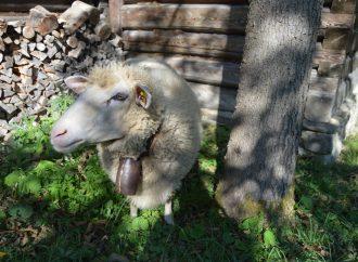 Otvorenie pastierskej sezóny v Múzeu kysuckej dediny
