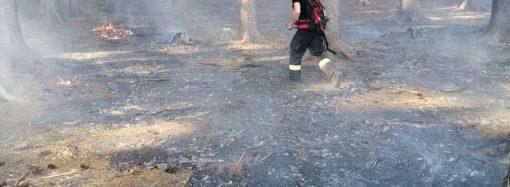 Členovia DHZ Vysoká nad Kysucou a DHZ Horný Kelčov zasahovali pri lesných požiaroch