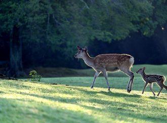 Obec Skalité vyzýva k ochrane mláďat zveri