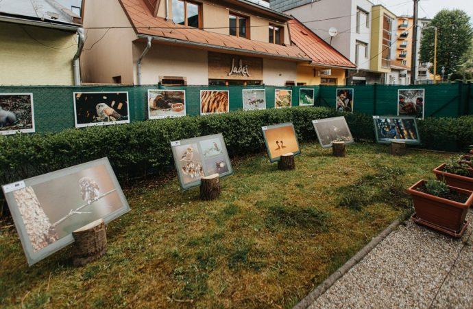 Oravská knižnica Antona Habovštiaka spúšťa dve nové výstavy zamerané na ochranu životného prostredia