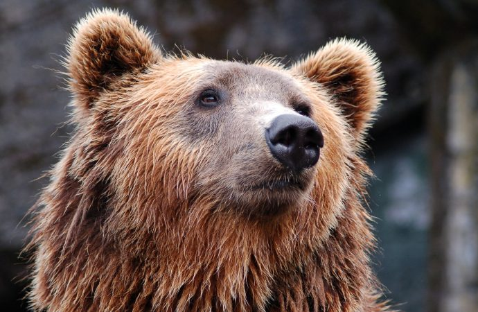 Horská záchranná služba pomáhala turistom, ktorí stretli medveďa