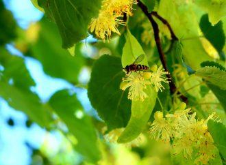 Včelárska a sladká nedeľa opäť pripomenie životne dôležitý význam včiel