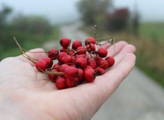Príroda lieči: Za hlohom pod Predný Choč